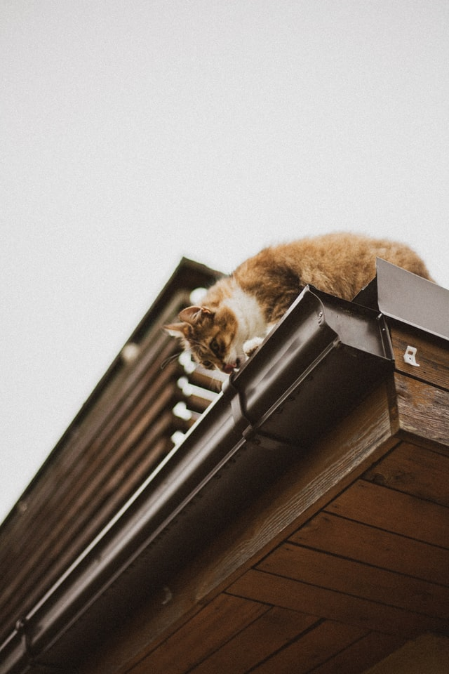 Look Up to These Signs That Your Home Needs New Gutters
